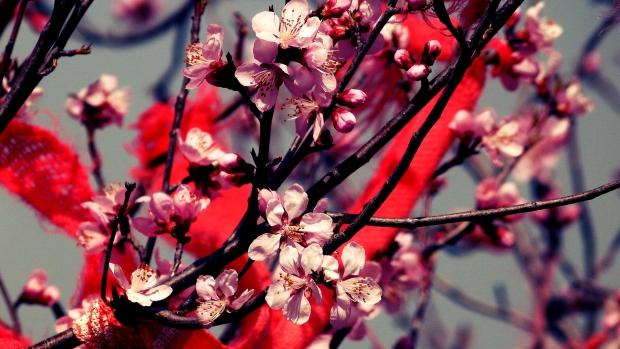 52 Spring in Huashan